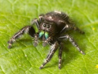 8 things you can learn from a spider